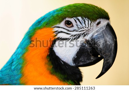 focusing on the beak of a blue-and-yellow macaw - stock photo