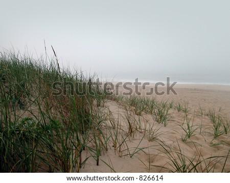 fog - stock photo