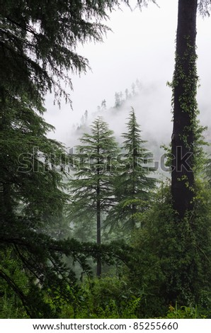 Fog after rain in wild forest, North India,  Himalayan - stock photo
