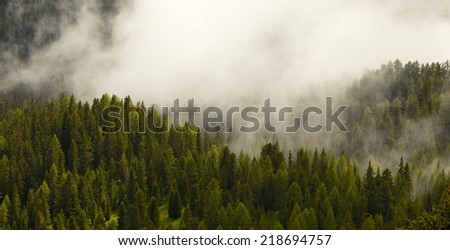 Fog covering the mountain forests - stock photo
