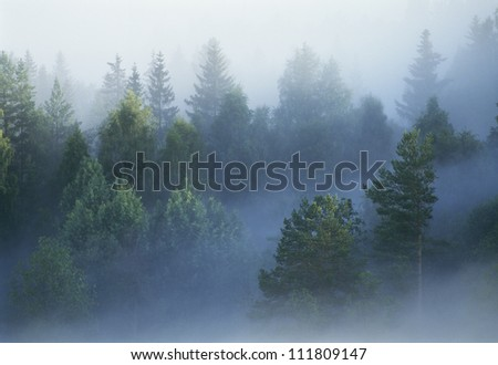 Fog in a forest, aerial view - stock photo
