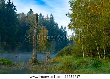 Fog in a wood - stock photo