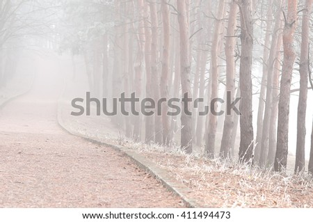 Fog in pine forest with road - stock photo