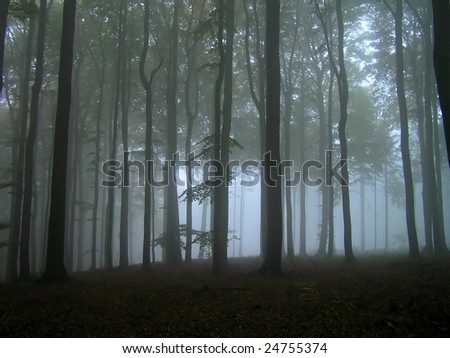 Fog in the forest. - stock photo