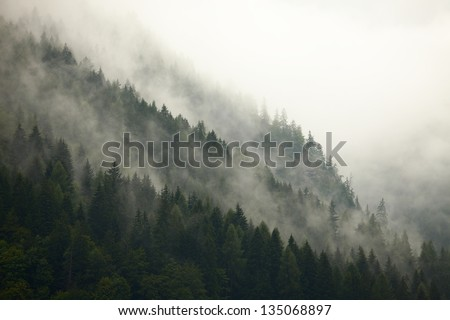Fog in the mountain forests - stock photo