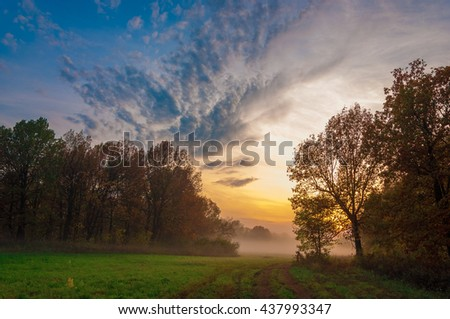 fog mist haze smoke brume toman. Fog in autumn oak forest. Misty morning in autumn forest - stock photo
