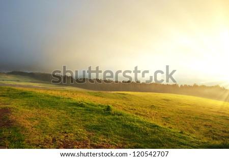 fog on meadow - stock photo