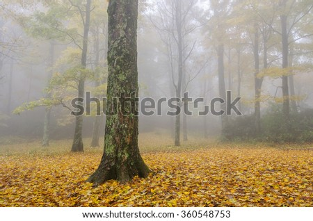 Foggy autumn forest scene in the Blue Ridge Mountains of North Carolina - stock photo