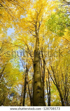 Foggy autumn Forest with colorful Trees - stock photo