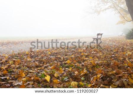 Foggy autumn in city park, nature - stock photo