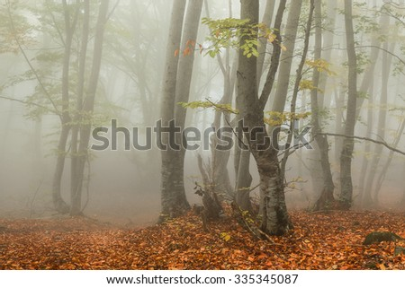 Foggy autumn in the forest. Trees with fallen leaves - stock photo