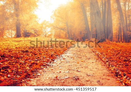 Foggy autumn landscape view of foggy autumn park with fallen autumn leaves,soft filter applied -beautiful autumn landscape in cloudy foggy weather with yellow autumn trees along deserted autumn alley - stock photo