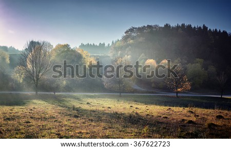 Foggy autumn landscape with magic autumn trees. Countryside landscape on fall season. Trees with golden branches, twilight.. (harmony, relaxation - concept) - stock photo