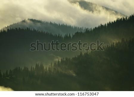Foggy Carpathian forest after rainy night - stock photo