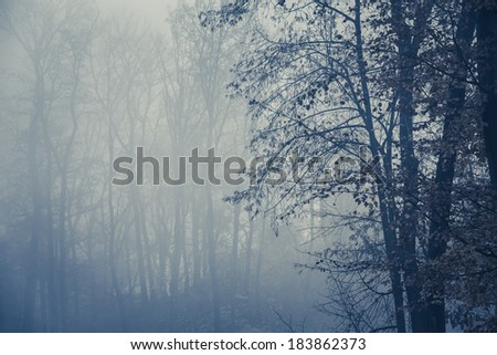 Foggy dark forest with trees silhouette in foreground, copy space - stock photo