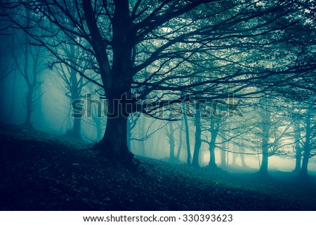 Foggy darkened path leading through the bare trees of a Monte Cucco park. - stock photo