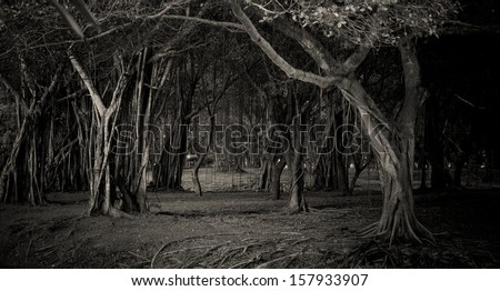 Foggy darkened path leading through the bare trees of a park. - stock photo