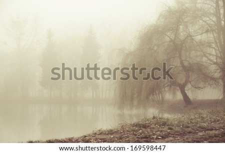 Foggy day - stock photo