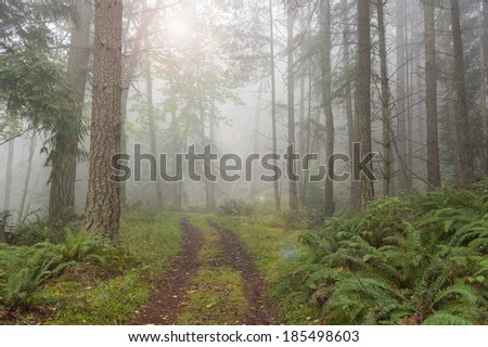 Foggy Forest. An atmospheric look at a Pacific Northwest forest during a foggy morning. Firs trees and ferns are the predominate flora in the area. The fog adds a spooky feel to the landscape. - stock photo