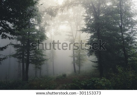 foggy forest background - stock photo