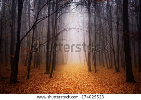 Foggy forest during autumn - stock photo