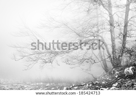 foggy forest in black and white - stock photo