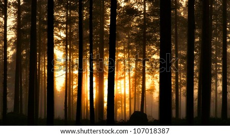 Foggy forest in early morning - stock photo