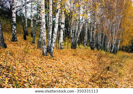 Foggy landscape with bare trees and red fallen leaves.  - stock photo
