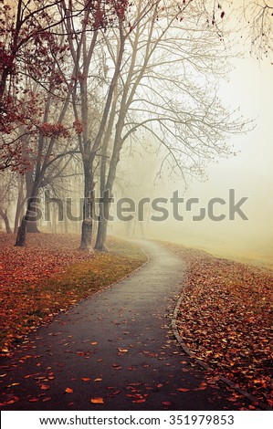 Foggy landscape with bare trees and red fallen leaves. Soft focus and vintage tones processing - stock photo