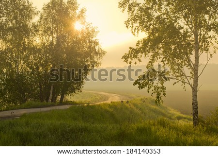 Foggy landscape with road and trees in the field - stock photo