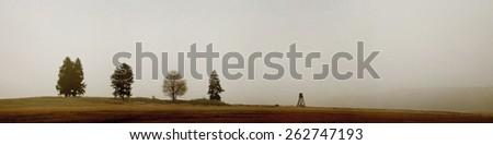 Foggy meadow - stock photo