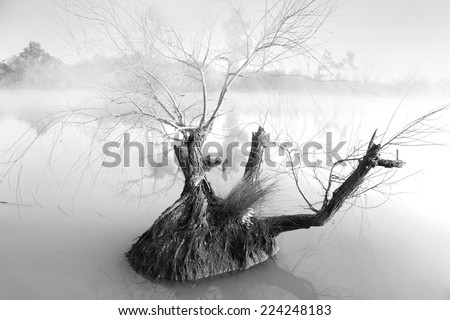 Foggy morning  at Pughs Lagoon.  Single  gnarled tree in foreground waters. - stock photo