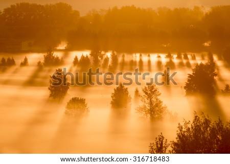 Foggy morning, dawn, long shadows - stock photo