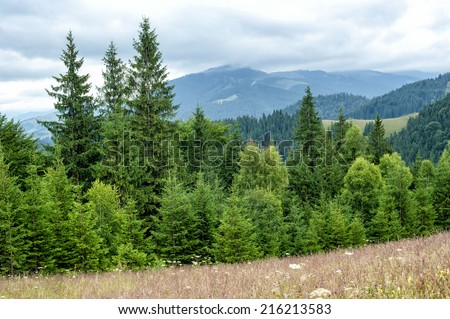 Foggy morning landscape with pine tree highland forest at Carpathian mountains. Ukraine destinations and travel background - stock photo