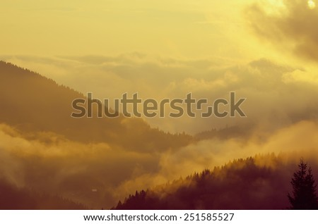 Foggy morning shiny summer landscape with mist and  golden forest - stock photo
