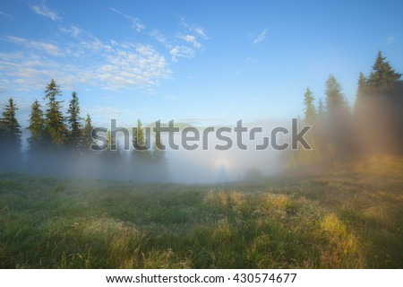Foggy morning summer countryside landscape - stock photo