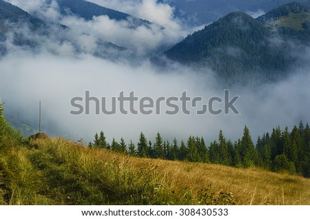 Foggy morning summer landscape with fir trees, seasonal travel background - stock photo