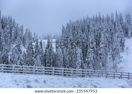 Foggy morning winter scenery with frozen and snow covered wooden fence and coniferous forest. - stock photo