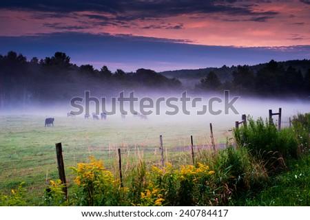 foggy pasture  - stock photo