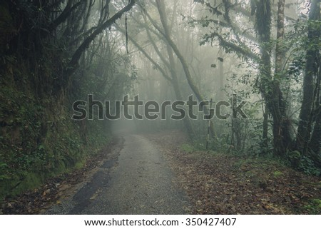 Foggy Road in Mossy Forest. Misty road view, Cameron Highlands, Malaysia. Foggy road view - stock photo