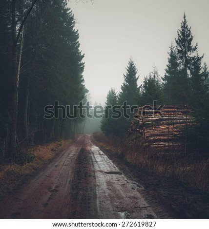 foggy road in the forest with trees beautifully - stock photo
