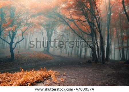 Foggy Spooky Autumn Forest - stock photo