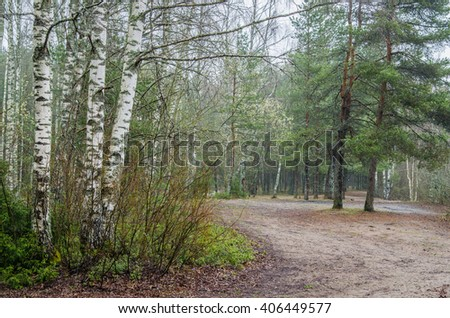 Foggy spring landscape with footpath in the woods - stock photo