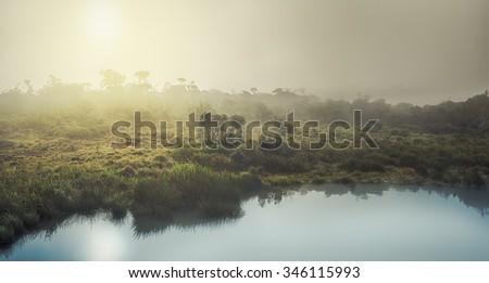 Foggy sunrise at Horton Plains. Panorama - stock photo