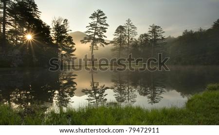 Foggy Sunrise in Forest, North Carolina - stock photo
