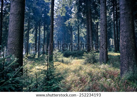 foggy thuringian forest in the morning - stock photo