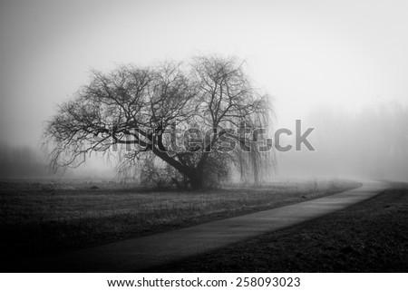 Foggy tree - stock photo