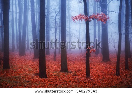 Foggy trees in forest with red leaves and blue mist on background. Selective focus - stock photo