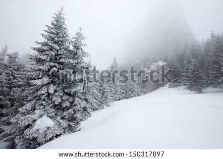 Foggy winter landscape with firs - stock photo