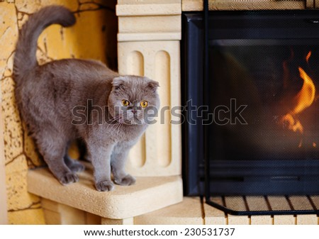 Fold grey cat with yellow eyes sitting at the fireplace - stock photo